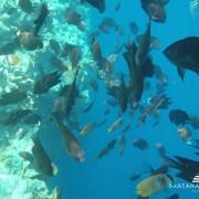 Bunaken island Snorkeling & Diving