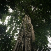 Endemic of Tangkoko National Park 5