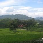Tana Toraja Tour 4