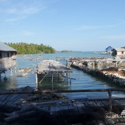 Wakatobi Diving 5
